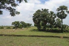 Ein schönes Dorf mit Ackerland, Bäumen und Wiesen stockfoto