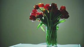 Ein schönes großes Bündel Tulpen sind im Vase stock video
