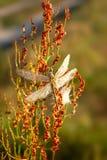 Ein schönes Insekt eines Libelle Sympetrum-vulgatum gegen einen Hintergrund des grünen vegetativen natürlichen Hintergrundes tone lizenzfreie stockfotos