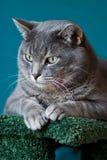 Ein schönes Katzeportrait Stockbilder