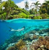 Ein schönes Mädchen schnorchelt im Meer voll von überraschenden Korallenriffen Stockfotografie