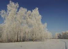 Ein schönes Panorama des Winterwaldes an einem eisigen sonnigen Tag Lizenzfreies Stockfoto