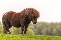 Ein schönes Pony, das auf Gras steht stockfotografie