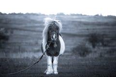 Ein schönes Pony, das für die Kamera aufwirft stockbilder