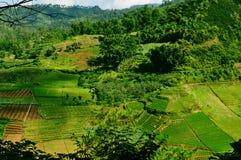 Ein schönes Reisfeld Lizenzfreies Stockbild