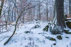 Ein schönes ruhiges Landschaftsbild im Winter lizenzfreie stockfotografie