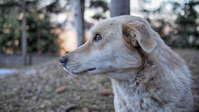 Ein schönes wilder denkendes Hundeporträt, hoch oben in den Bergen Stockfotos