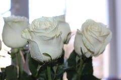 Ein sch?ner Blumenstrau? von wei?en Rosen appelliert jeder Frau Sein k?niglicher Duft erobert jedes stockfotografie