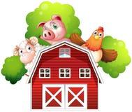 Ein Schaf, ein Schwein und ein Huhn, die an der Rückseite einer Scheune sich verstecken stock abbildung