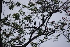 Ein Schatten oder ein Schattenbild des Vogels versteckt in der Mitte von Niederlassungen und von Blättern des Baums Stockbild