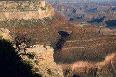 Ein Schattenbild eines Baums kontrastiert gegen die sunbaked Schichten Grand Canyon s stockbilder