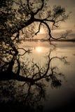 Ein Schattenbild und eine Reflexion eines Baums durch den Fluss bei Sonnenuntergang Stockbild