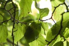 Ein Schattenbild von Blättern vor der Sonne lizenzfreies stockbild