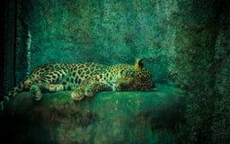 Ein Schlafengepard Stockbild
