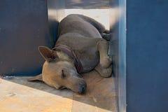 Ein Schlafenhund Lizenzfreies Stockbild