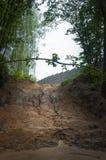 Ein Schlamm, der hinunter den Hügel im Wald läuft Stockbild
