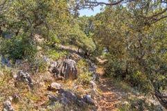Ein schmaler Fußweg durch die Mittelmeerbüsche und die Bäume Lizenzfreies Stockbild
