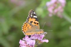 Ein Schmetterling über einer Blume in einem botanischen Garten Lizenzfreies Stockbild