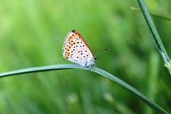 Ein Schmetterling Lizenzfreies Stockfoto