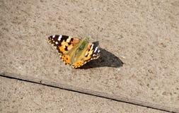 Ein Schmetterling Lizenzfreie Stockfotos