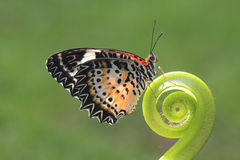 Ein Schmetterling auf dem grünen Blatt stockfotografie