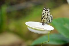 Ein Schmetterling im Blumengarten Stockbilder