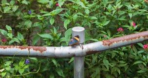 Ein Schmetterling steht still Stockfotos