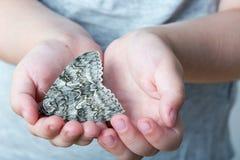 Ein Schmetterling von silkmoth in einem child' s-Hände - Lymantria dispar Lizenzfreies Stockfoto