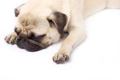 Ein schmollender Pug, getrennt auf Weiß Stockfoto