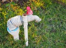 Ein schmutziger alter Hahn auf grünes Gras backourund Lizenzfreies Stockfoto