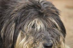 Ein schmutziges lustiges scheinen kein denkender alter Hund Stockfoto