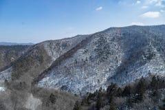 Ein schneebedeckter Berg bedeckt durch verwelkte Bäume stockbild