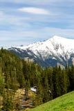 Ein schneebedeckter Berg und ein Wald Stockbilder