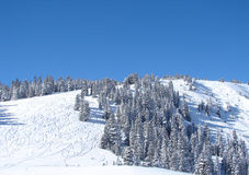 Ein schneebedeckter Skihügel Stockfotos