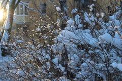 Ein schneebedeckter Strauch Stockfotografie