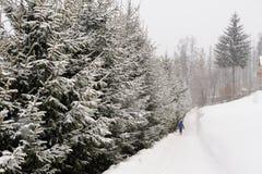 Ein schneebedeckter Weg zeichnete mit gezierten Bäumen in Süd-Polen während des Schneeblizzards im Winter nahe der Stadt von Wisl Lizenzfreie Stockfotografie