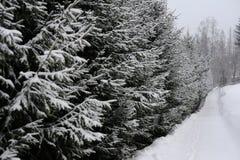 Ein schneebedeckter Weg zeichnete mit gezierten Bäumen in Süd-Polen während des Schneeblizzards im Winter nahe der Stadt von Wisl Stockfoto