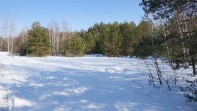 Ein schneebedecktes Feld nahe einem grünen Kiefernwald im sonnigen Wetter Stockbilder