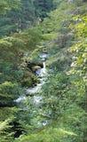 Ein schnell fließender Strom, der durch Waldland läuft Lizenzfreies Stockbild
