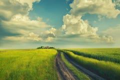 Ein Schotterweg auf dem grünen Gebiet des Weizens Lizenzfreie Stockfotos