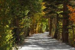 Ein Schotterweg im Park Stockbild