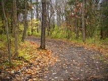 Ein Schotterweg im Wald Lizenzfreie Stockfotos