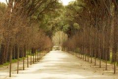 Ein Schotterweg mit den Bäumen gezeichnet auf beiden Seiten lizenzfreies stockbild
