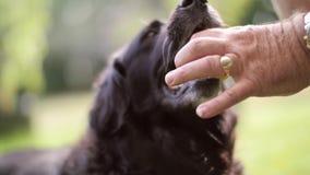 Ein Schuss eines Mannes, der Ball mit einem Hund spielt stock footage