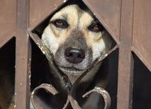 Ein Schutzhund sehnt Freiheit herbei Stockbild