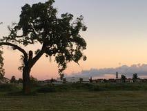 Ein schwacher Baum stockfoto