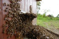 Ein Schwarm der Bienen Lizenzfreie Stockfotos