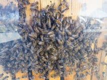 Ein Schwarm von Bienen im Beweis stockbilder