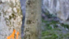 Ein Schwarm von Fliegenameisen stock footage
