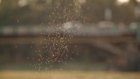 Ein Schwarm von Moskitos auf dem Hintergrund einer Transportbrücke stock video